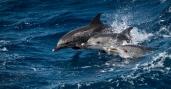 Dolphin Trio Close